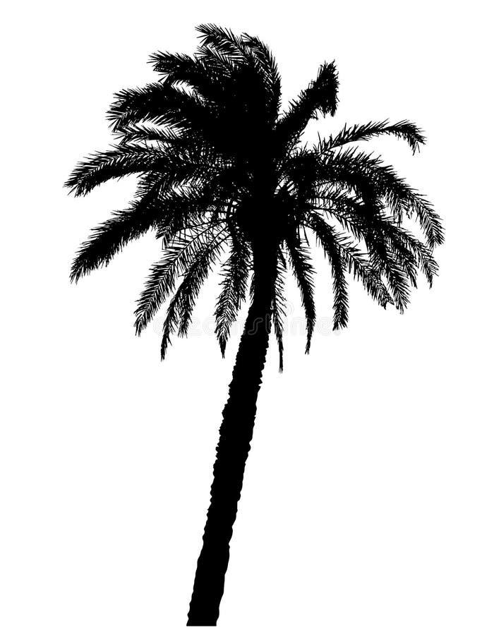 Sylwetka drzewko palmowe realistyczna wektorowa ilustracja ilustracja wektor