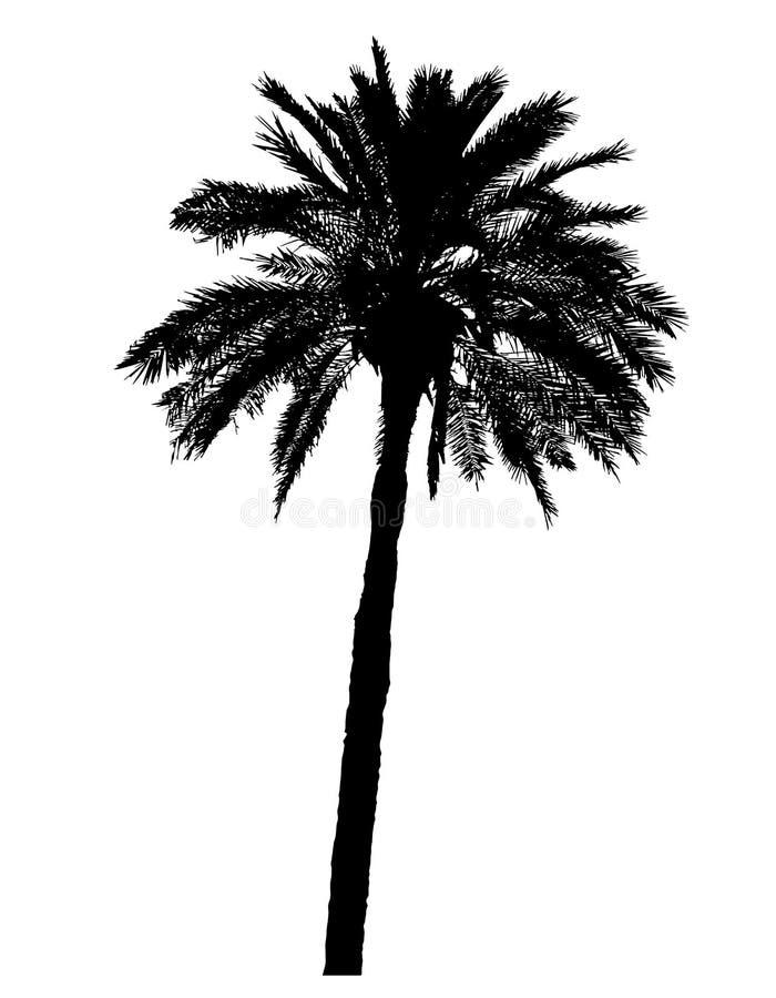 Sylwetka drzewko palmowe realistyczna wektorowa ilustracja royalty ilustracja