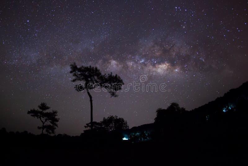 Download Sylwetka Drzewny I Milky Sposób Długa Ujawnienie Fotografia Obraz Stock - Obraz złożonej z nauka, gwiaździsty: 53783765