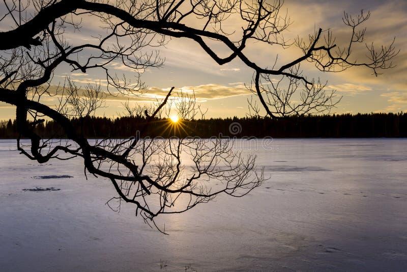 Sylwetka drzewo nad zamarzniętym jeziorem przy zmierzchem obrazy royalty free