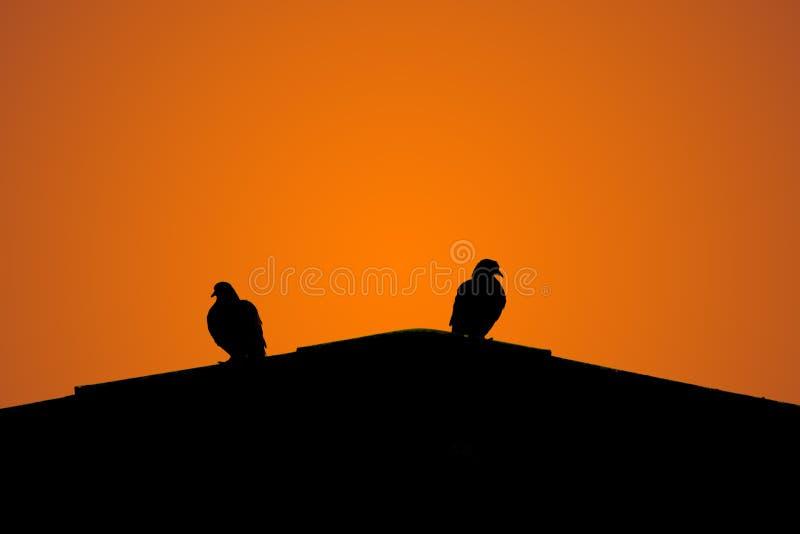 Sylwetka dwa gołąbki na górze dachu obraz royalty free