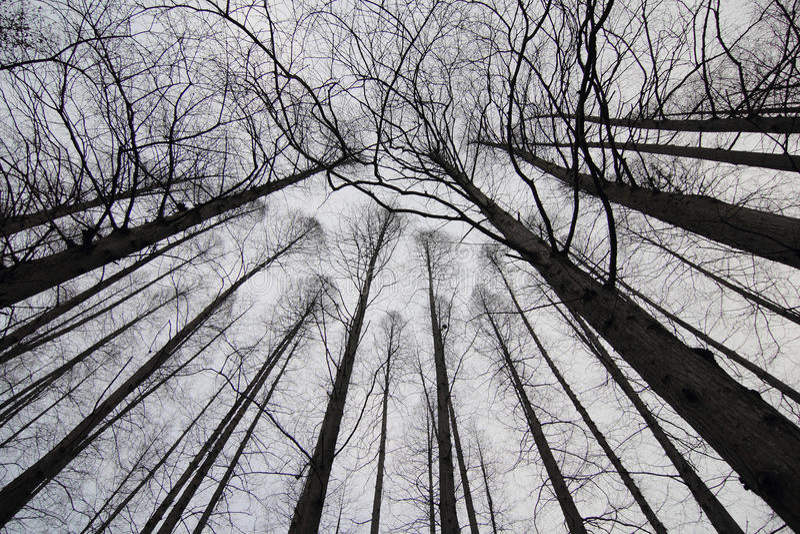 Sylwetka gałąź drzewa obraz stock
