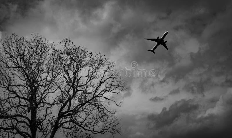 Sylwetka handlowy samolot na popielatym niebie i chmurach z śmiertelnym drzewem Nieudany wakacje Beznadziejny i rozpacz pojęcie m zdjęcie stock