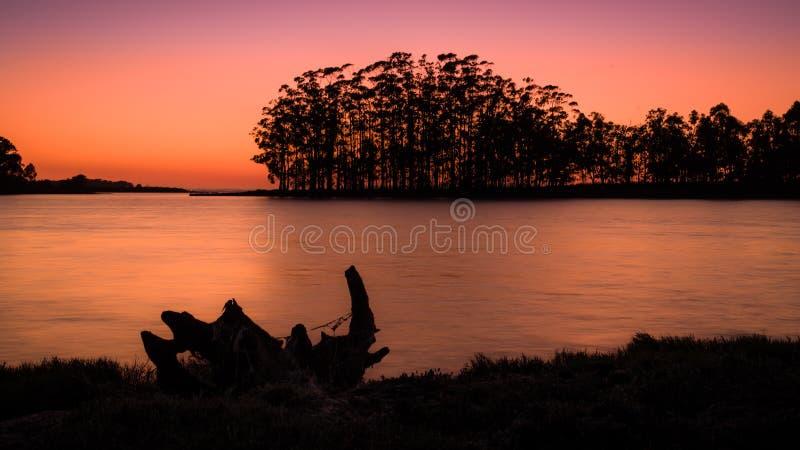 Sylwetka i podświetlenie bagażnika o zachodzie słońca, niedaleko Cambados, Galicia obraz royalty free