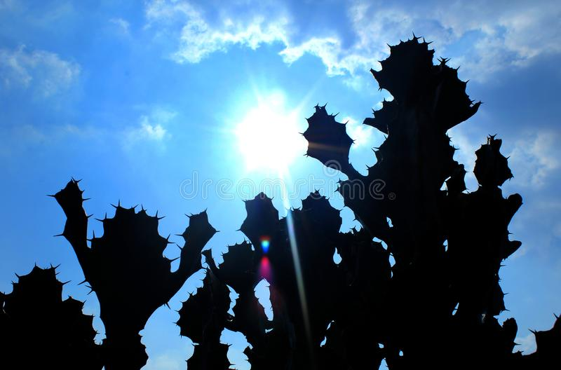Sylwetka indyjskie kaktus rośliny z słońce promieniami obrazy stock
