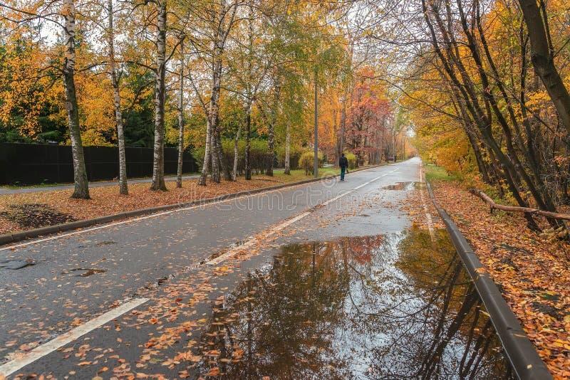 Sylwetka jednego nierozpoznawalnego człowieka, spaceruj w jesiennym parku Sezony, nastrój nostalgiczny, tło naturalne obrazy stock