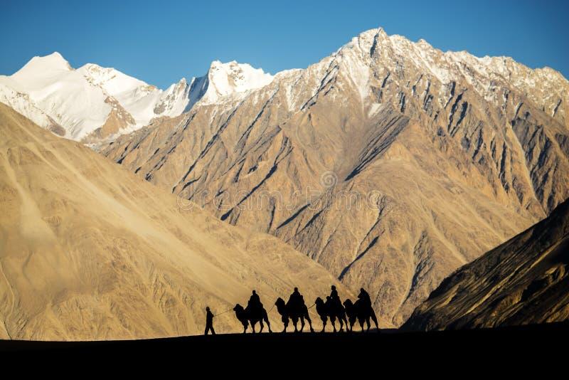 Sylwetka karawanowi podróżnicy jedzie wielbłądy Nubra Dolinny Ladakh, India obraz stock