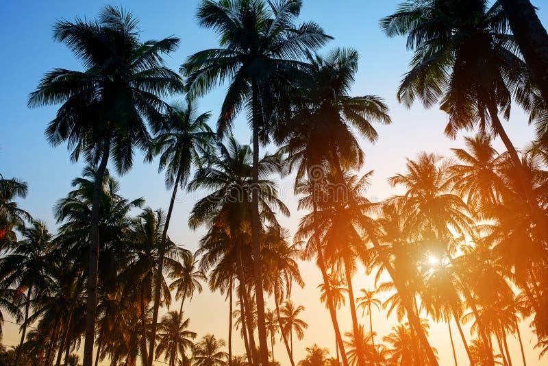 Sylwetka kokosowi drzewka palmowe na kolorowym słońce secie obrazy royalty free