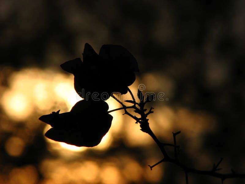 sylwetka kwiat zdjęcie stock