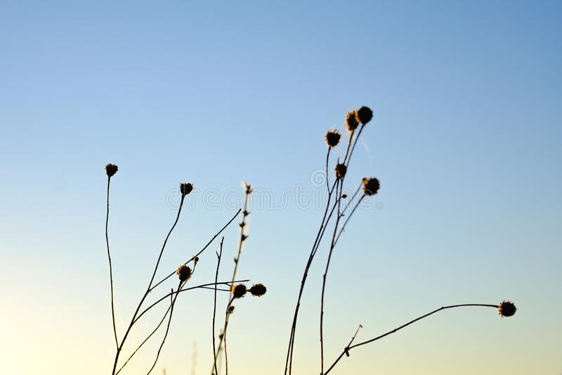 Sylwetka kwiaty zdjęcie royalty free
