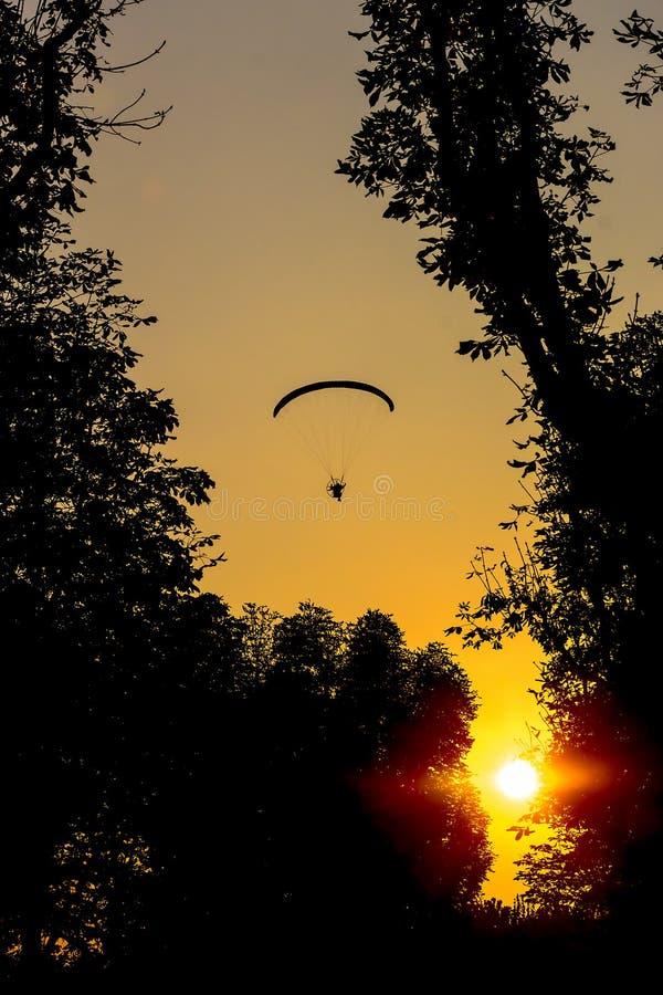 Sylwetka lata nad drzewami paraglider zdjęcie royalty free