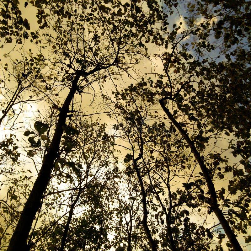 Sylwetka leśna pod niebem świtu obrazy royalty free