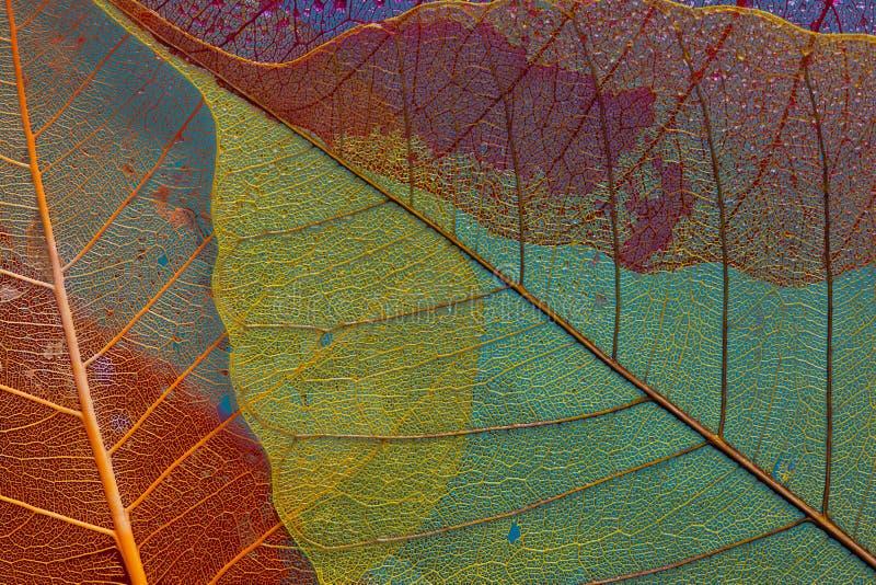 Sylwetka liść trzy obrazy stock