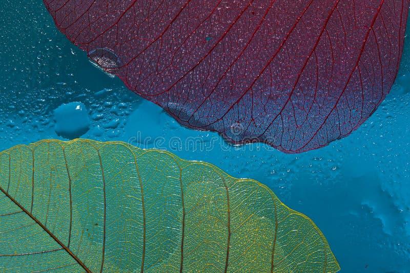 Sylwetka liść trzy zdjęcie royalty free
