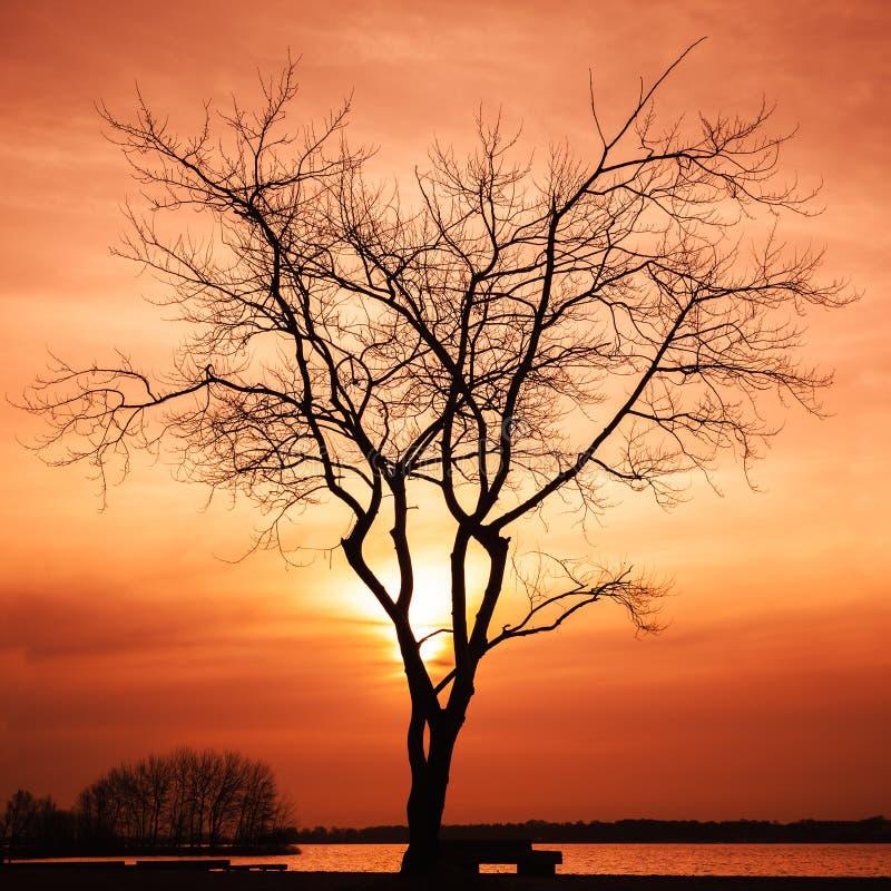 Sylwetka nagi drzewo przy zmierzchem obraz royalty free