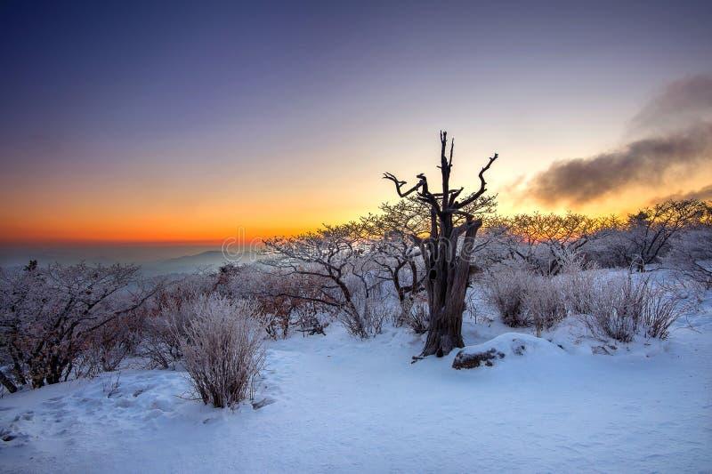 Sylwetka nieżywi drzewa, piękny krajobraz przy wschodem słońca na Deogyusan parku narodowym w zimie, Korea obrazy royalty free