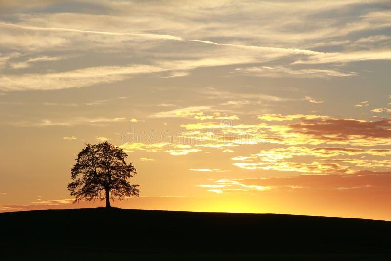 Sylwetka osamotniony dębowy drzewo, piękna zmierzch sceneria zdjęcia royalty free