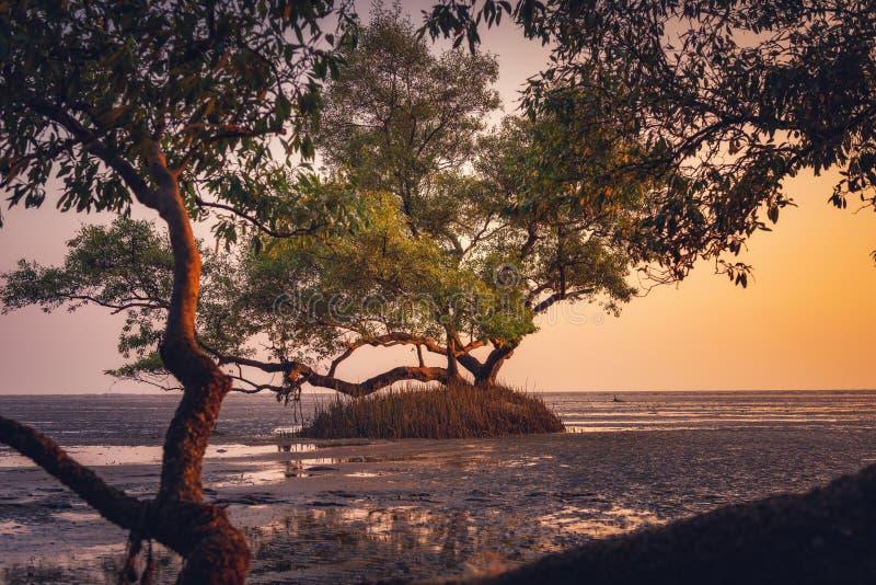 Sylwetka Osamotniony drzewo w Dennym wybrze?u przy zmierzchem, Naturaln? sceneri? Seascape, krajobrazem, horyzontem i pla??, obrazy stock