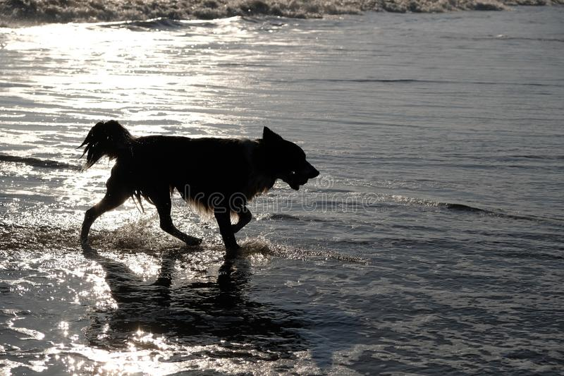 Sylwetka pies w morzu obraz royalty free