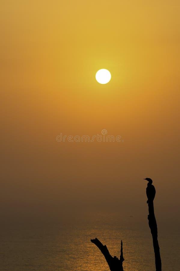Sylwetka ptaki na gałąź tle ranku słońca światło odbija łodzie rybackie i morze zdjęcia stock
