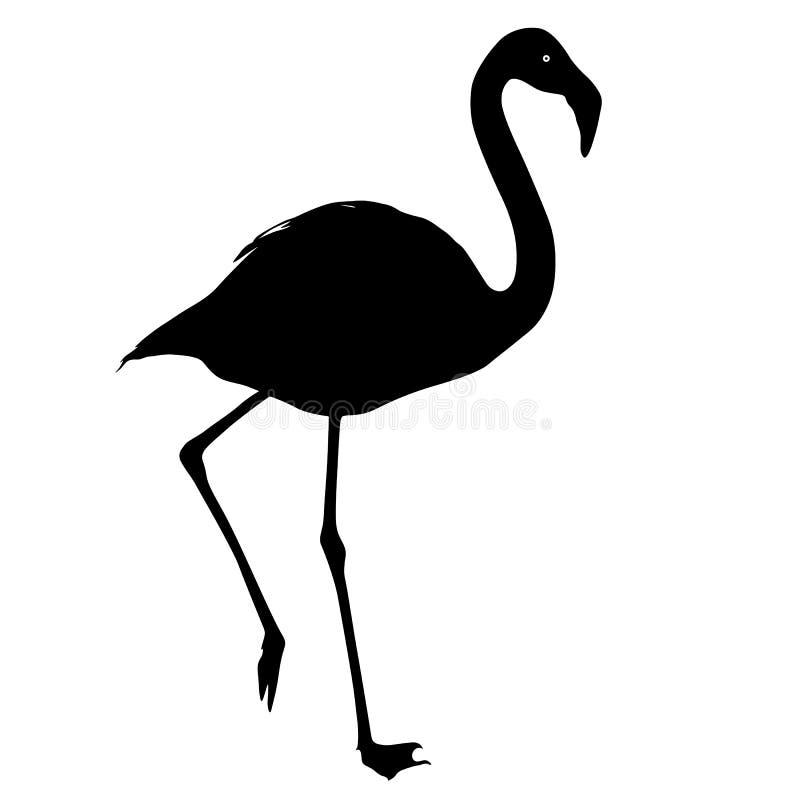 Sylwetka ptasi flaming na białym tle royalty ilustracja