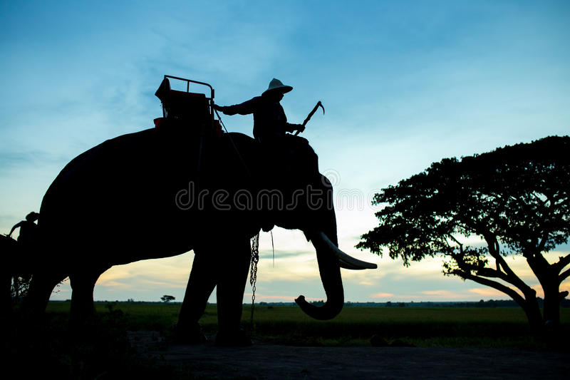 Sylwetka słoń z mahout zdjęcia stock