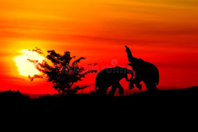 sylwetka słonia bitwy zwierząt przyroda w mrocznego zmierzchu pięknym tle zdjęcia royalty free