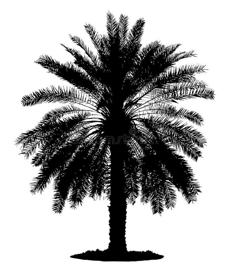 Sylwetka samotna palma ilustracja wektor