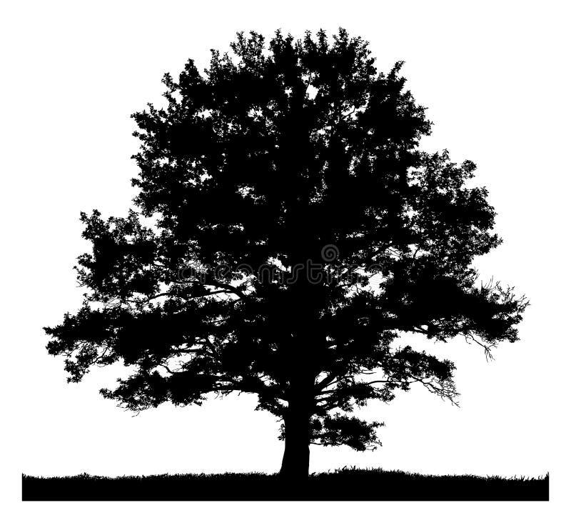 Sylwetka samotny drzewo ilustracji