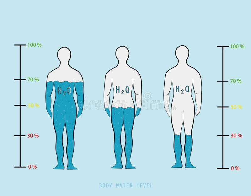 Sylwetka seansu wody infographic odsetek równy w ciało ludzkie wektoru ilustraci ilustracja wektor