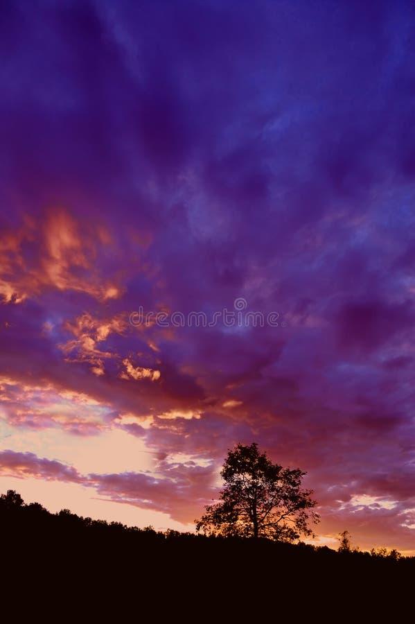 sylwetka sunset drzewo zdjęcie stock