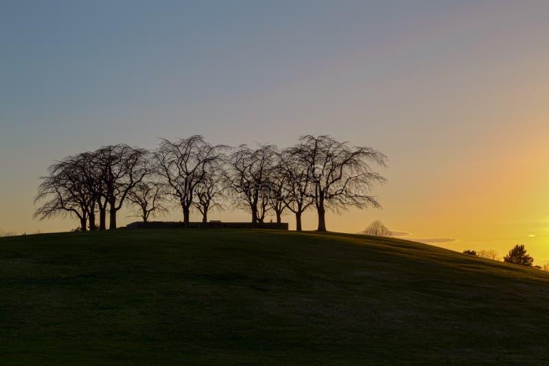 Download Sylwetka Wiązu Gaj Przy Lasu Cmentarzem W Sztokholm, Szwecja Podczas Zmierzchu Obraz Stock - Obraz złożonej z kopia, drzewa: 53780801