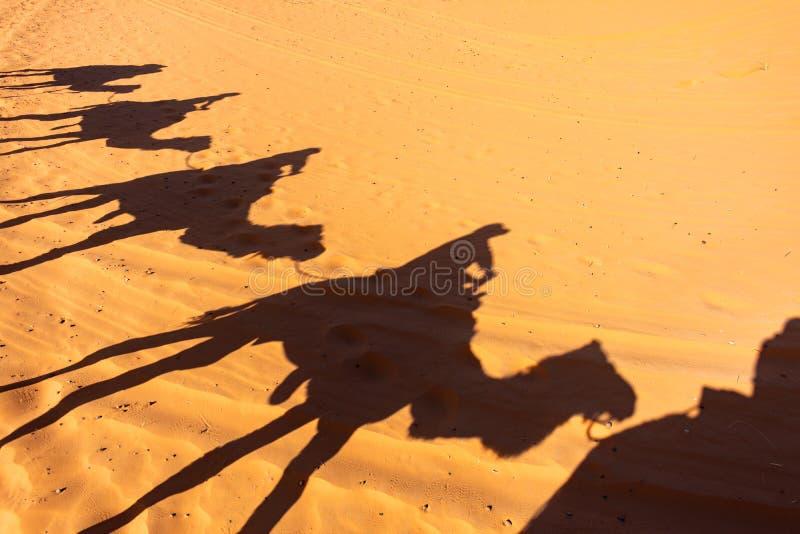 Sylwetka Wielbłądzi pociąg na piasku sahara zdjęcie royalty free