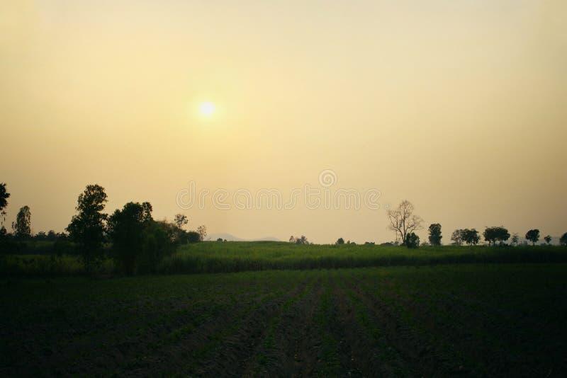 Sylwetka zielony trzciny gospodarstwo rolne z słońce rankiem w wzgórzach w mgle duże krajobrazowe halne góry fotografia stock