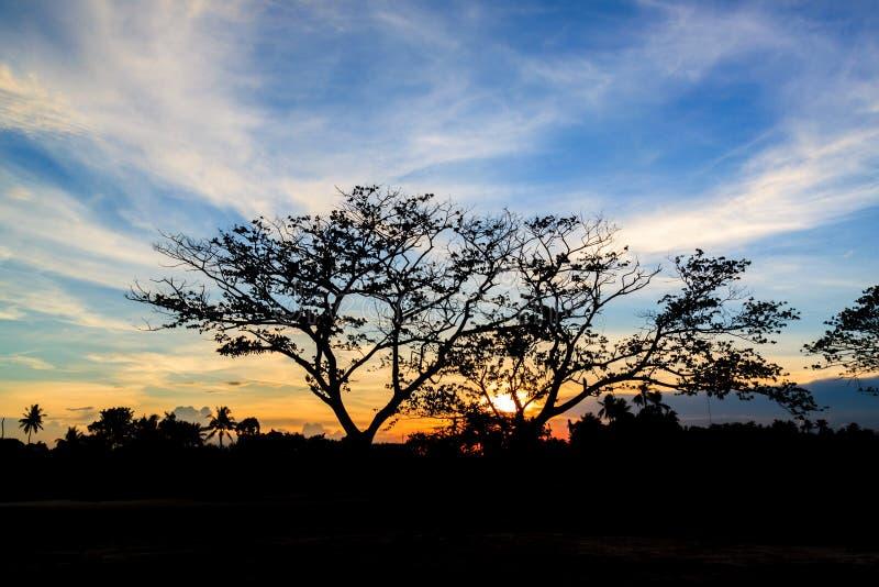 Download Sylwetka Zmierzch W Ogródzie I Drzewo Obraz Stock - Obraz złożonej z chmura, farm: 57659241