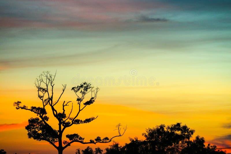 sylwetka zmierzchu suchy gałęziasty drzewny pomarańczowy niebo zdjęcia stock