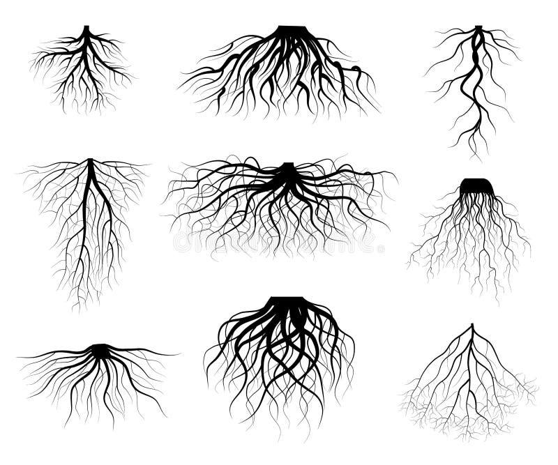 Sylwetki drzewa Czarnych korzeni Różnorodni typy kształty Ustawiający wektor ilustracja wektor