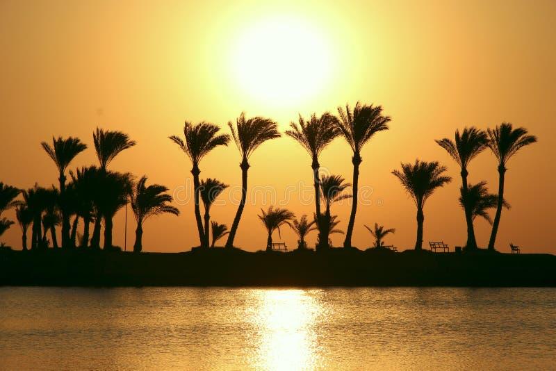 Sylwetki drzewka palmowe na wyspie na tle świt Jaskrawy słońce nad oceanem fotografia royalty free