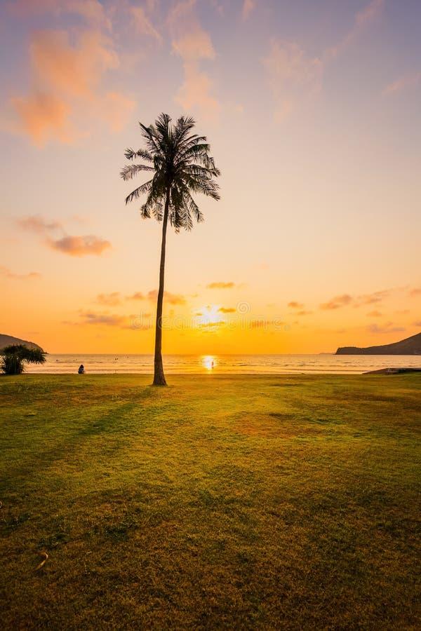 Sylwetki drzewka palmowe podczas przeciw zmierzchowi, wsch?d s?o?ca i g?ra plecy, obrazy royalty free