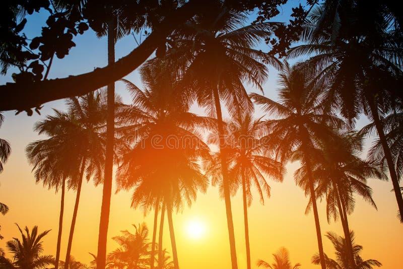 Sylwetki drzewka palmowe przeciw niebu podczas tropikalnego zmierzchu zdjęcie royalty free