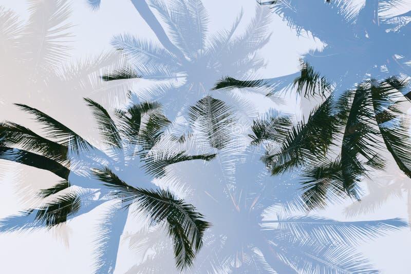 Sylwetki drzewko palmowe z dwoistego ujawnienia skutkiem w rocznika filtra tle fotografia royalty free