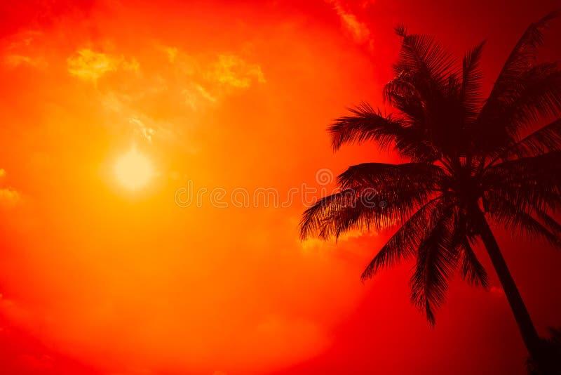 Sylwetki drzewko palmowe z jasnym pogodnym niebem z krańcową gorącą lato plażą obrazy stock