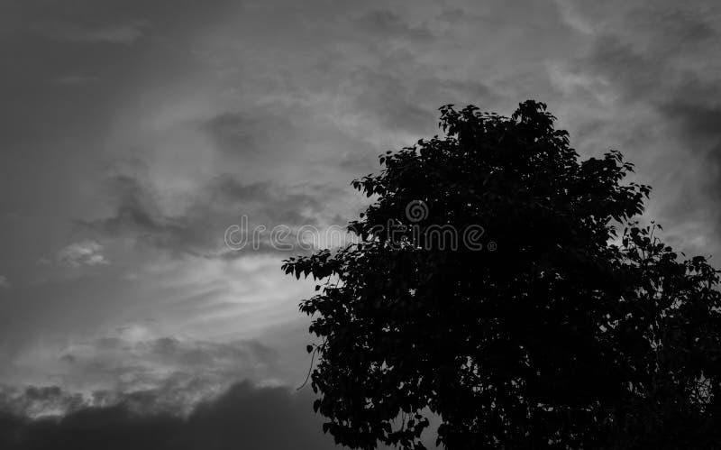 Sylwetki drzewo na ciemnym dramatycznym popielatym nieba i chmur tle dla strasznego, śmiertelnego i pokoju pojęcia, Halloweenowy  obraz royalty free