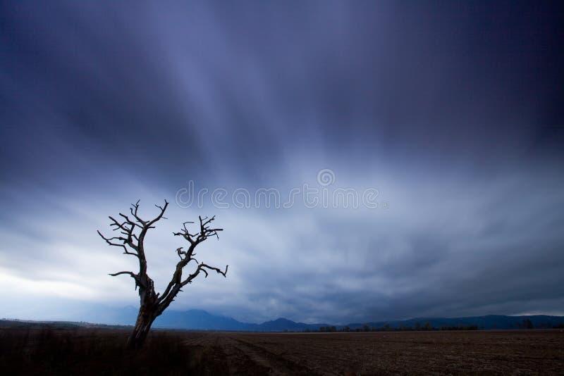 Sylwetki drzewo w łące Wietrzny i chmurny dzie? obrazy royalty free