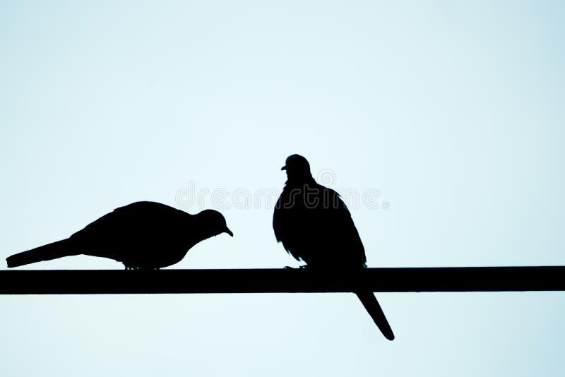 sylwetki dwa ptak zdjęcia royalty free