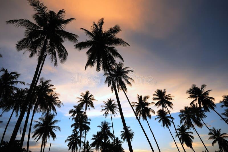sylwetki kokosowy drzewo obrazy stock