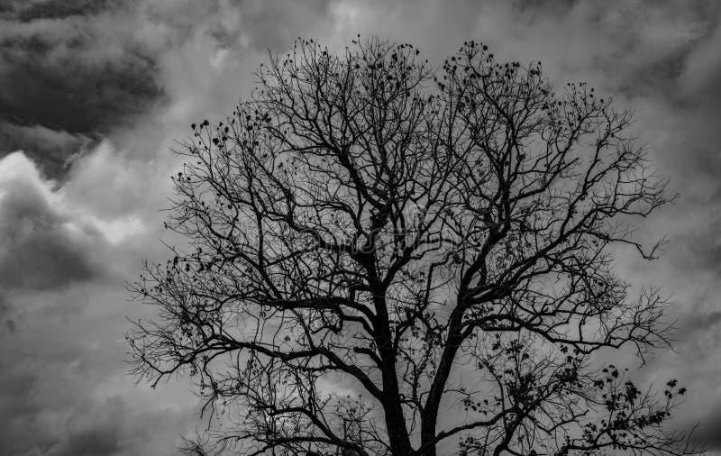 Sylwetki nieżywy drzewo na ciemnym dramatycznym popielatym nieba i chmur tle dla strasznego, śmiertelnego i pokoju pojęcia, Hallo zdjęcia stock