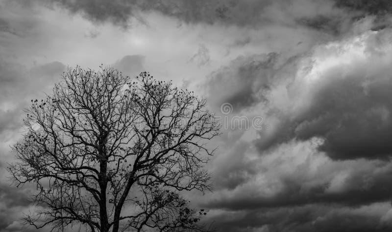 Sylwetki nieżywy drzewo na ciemnym dramatycznym popielatym nieba i chmur tle dla strasznego, śmiertelnego i pokoju pojęcia, Hallo fotografia royalty free