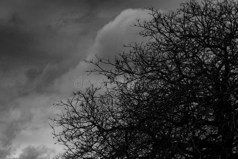 Sylwetki nieżywy drzewo na ciemnym dramatycznym popielatym nieba i chmur tle dla strasznego, śmiertelnego i pokoju pojęcia, Hallo obrazy stock