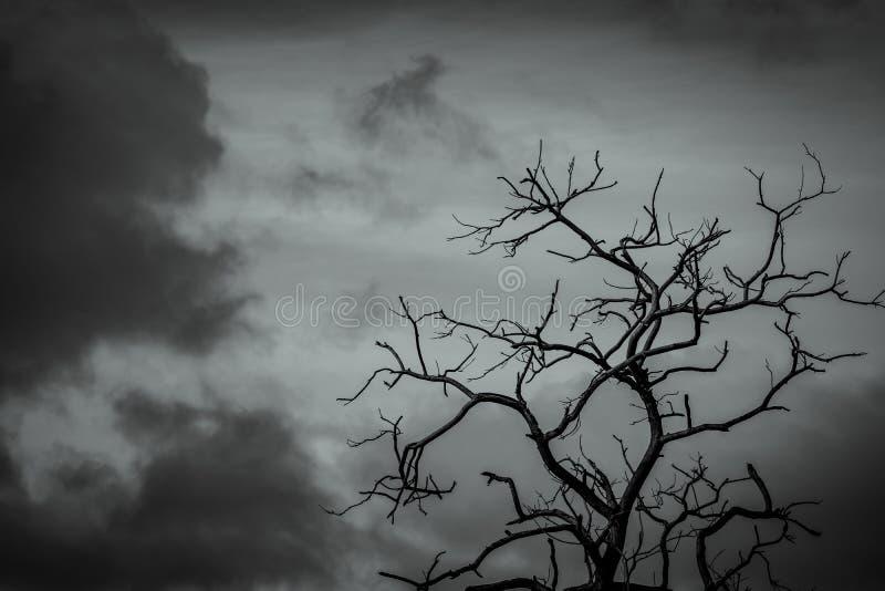 Sylwetki nie?ywy drzewo na ciemnym dramatycznym nieba tle dla strasznego lub ?miertelnego Bezlistna gałąź Beznadziejny, rozpaczu, obrazy stock